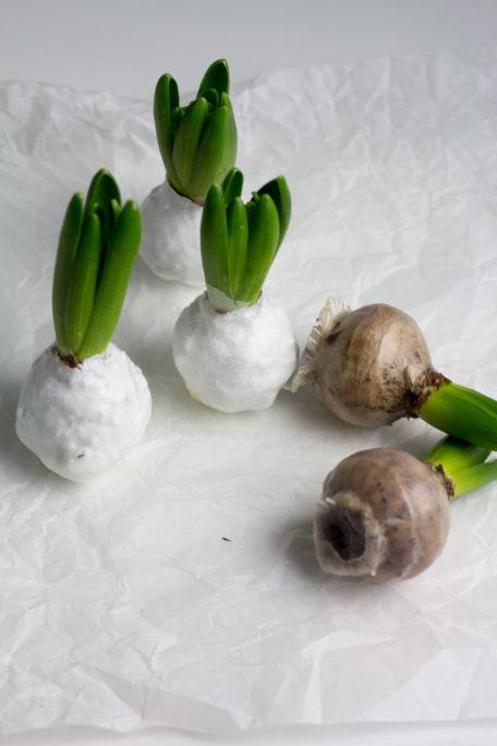 Hyazinthenzwiebeln im Wachskleid – Upcycling im Frühling Houseno37