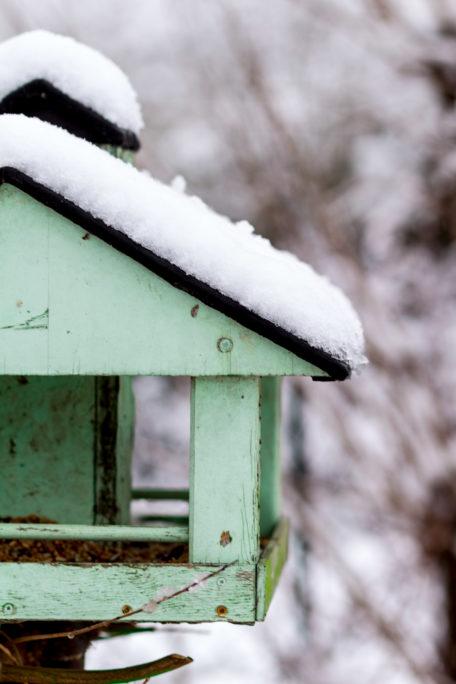 Vögel im Winter - Vogelfutter selbst machen