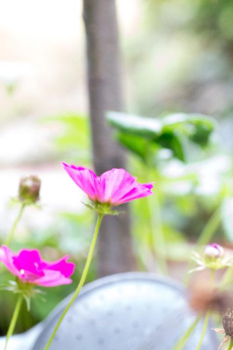 Schmuckkörbchen Garten Herbst