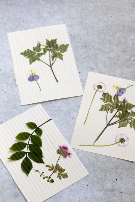 Gepresste Blüten